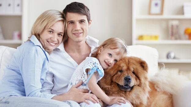 Wills & Trusts dog-young-family Direct Wills Bridgetown